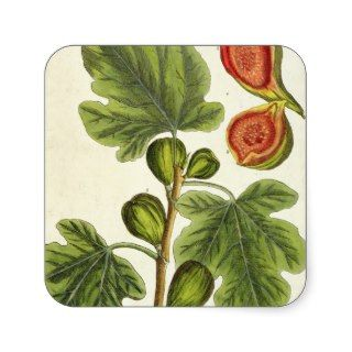 The Fig Tree, plate 125 A Curious Herbal, p Stickers