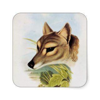 Tasmanian Wolf or Tiger Square Stickers