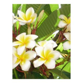 White and Yellow Frangipani Flowers with Leaves in Letterhead