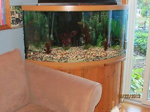 36 gallon corner bowfront aquarium for 90 gallon fish tank stand