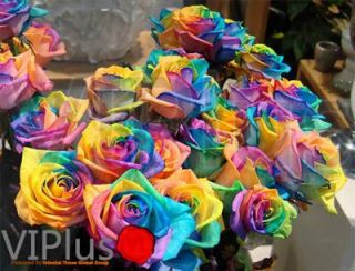 100 RARE Rainbow Rose Flower Seeds Your Lover Multi Color Plants Home Garden