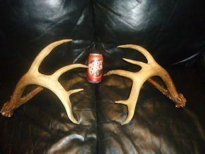 "Huge 136"" inch RARE Nontypical 5x6 Whitetail Deer Rack Antlers Sheds Elk Mule"