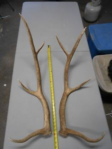 4x4 Elk Antler Sheds Antlers Whitetail Mule Deer Rack Moose Mount Crafts