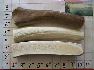Large Variety Pack of Elk Antler Dog Chews Bully Treats Organic Natural Shed