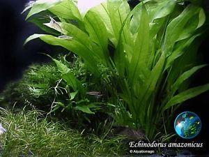 icus x3 Live Aquarium Plant Fish Tank BS