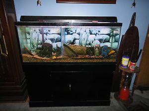 55 gallon fish tank top fin 55 gallon starter kit for 55 gallon aquarium decoration ideas