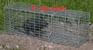 Animal Live Trap Cage Squirrel Chipmunk Rodent 16 x 5 1 2 Cat Rat New Humane