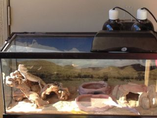 Bearded Dragon with Tank Lights and Heater