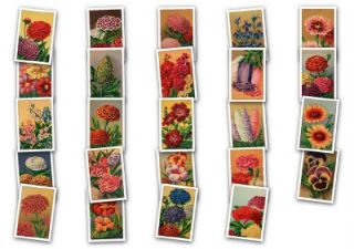 Vintage 20's French Flower Seed Label Images Clipart CD