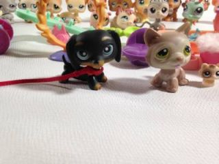 36 PC Littlest Pet Shop Dachshund Husky Others Accessories