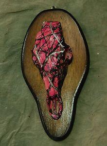 Deer Antler Skull Mount
