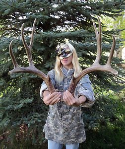 Mule Deer 5x5 Rack Shed Antlers Whitetail Horns Mount Taxidermy Skull Man Cave