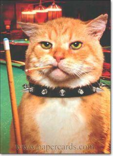 Cool Cat Funny Birthday Card Greeting Card by Avanti Press