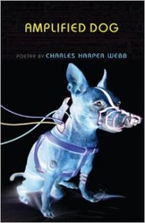 AMPLIFIED DOG: CHARLES WEBB: 9781597090223: Books