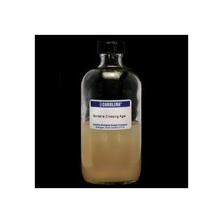 Mueller Hinton Agar, Prepared Media Bottle, 125 mL: Industrial & Scientific