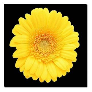 Yellow Gerber Daisy Wall Art   Photography