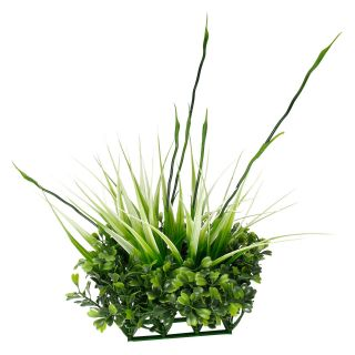 Fluval Chi Boxwood and Tall Grass Ornament   Aquarium Plants & Decorations