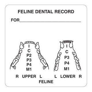 "Feline Dental Record 2 1/2"" x 2 1/2"" White Label (Roll of 390)  File Folder Labels"