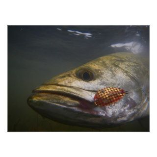Texas Speckled Trout Posters